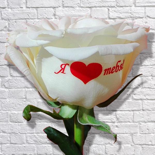 розы с поздравлениями на лепестках всегда ярким