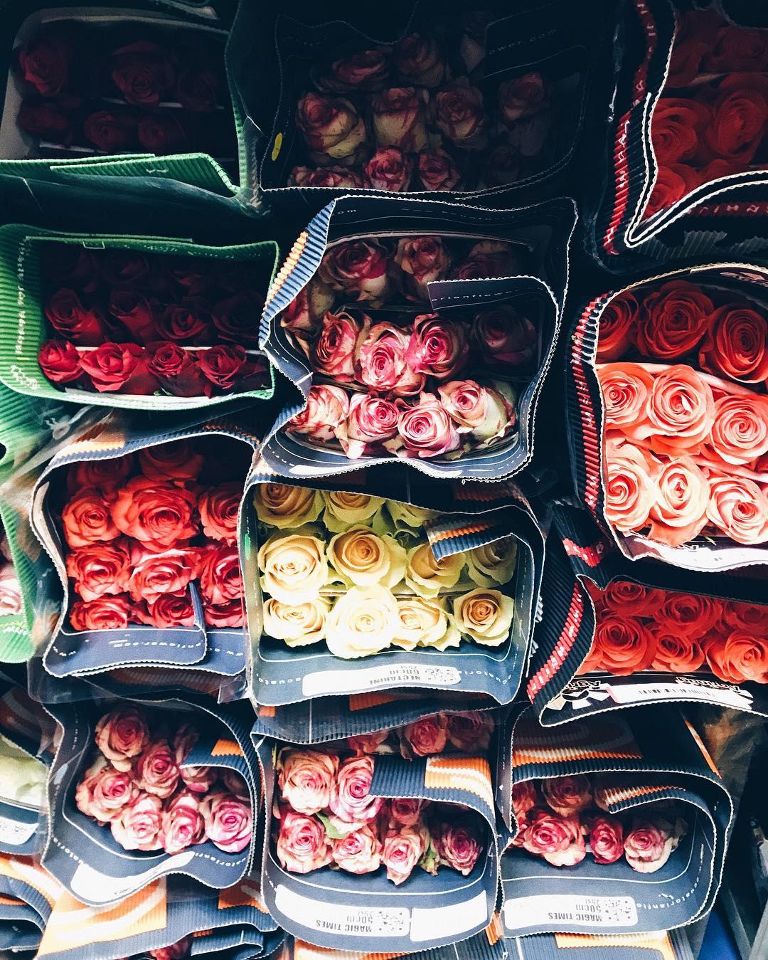 Розы оптом с доставкой по беларуси