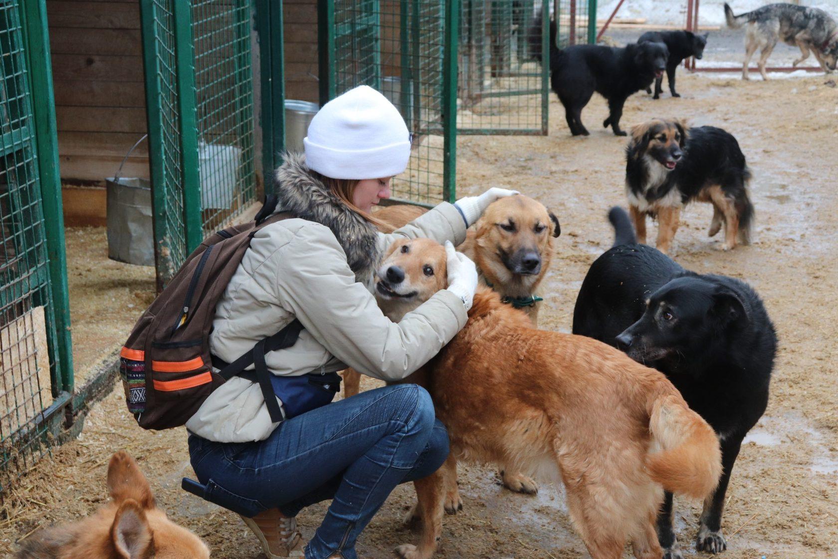 Картинки волонтеры животных