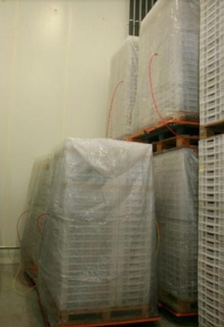 Процесс заморозки голубики в ящиках при помощи быстрого охлаждения