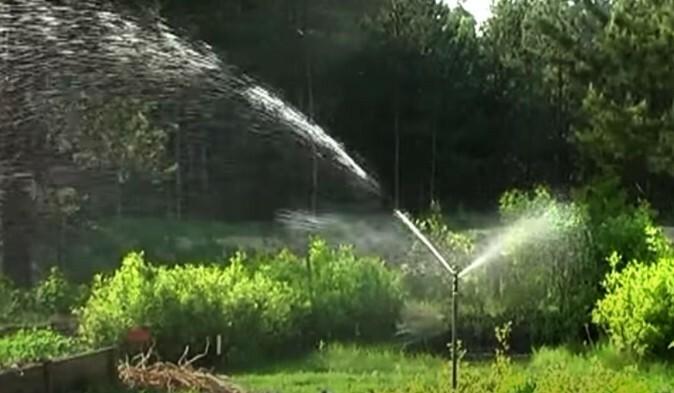 Своевременный полив способствует активной вегетации культуры