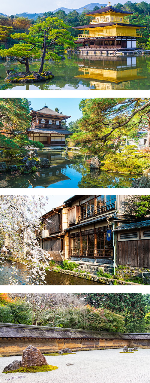 Золотой павильон и сосна в японском городе Киото