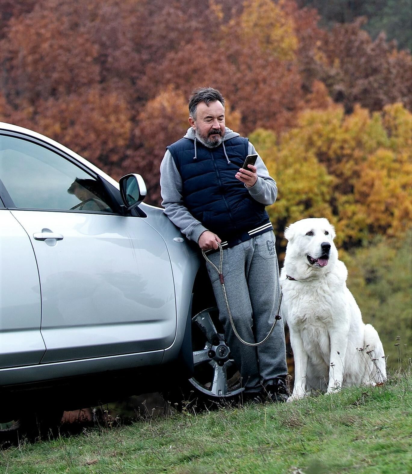 поездка с собакой на авто. как приучить щенка к машине