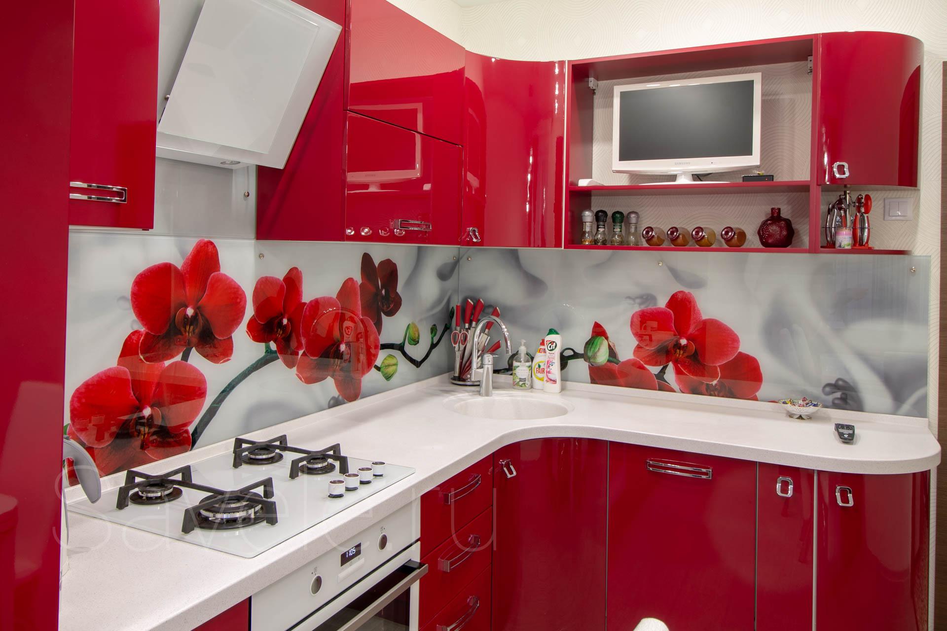 бордовый кухонный фартук фото группа классифицирует растения