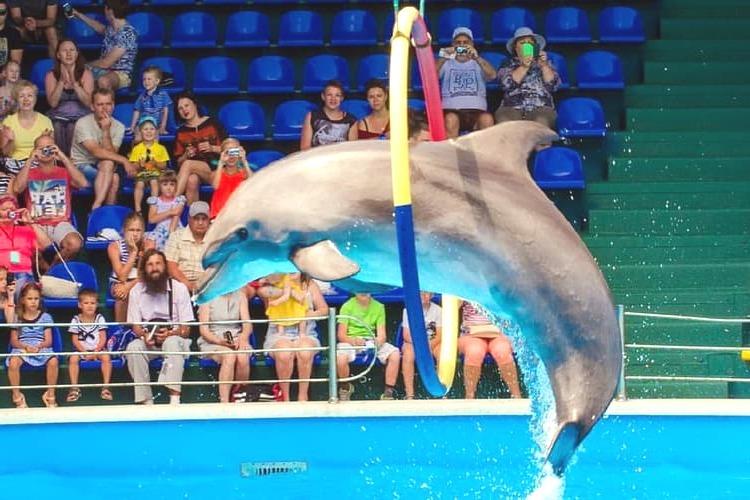 Дельфинарий Аквамир в Небуге