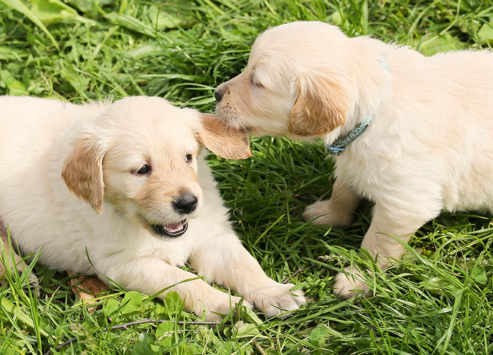 Собаки как капризные дети
