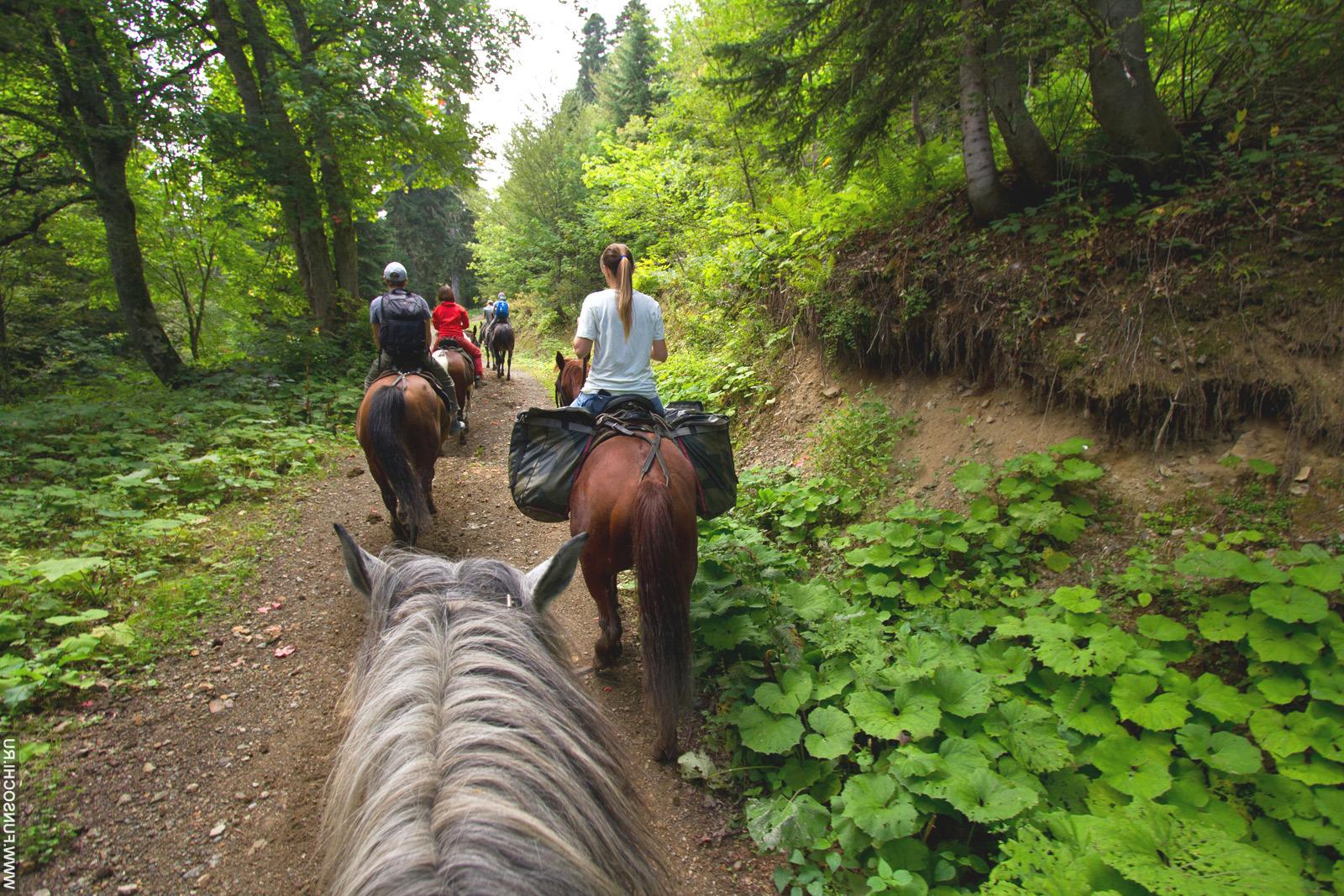 Обзорная прогулка на лошадях от конюшни в Лермонтово