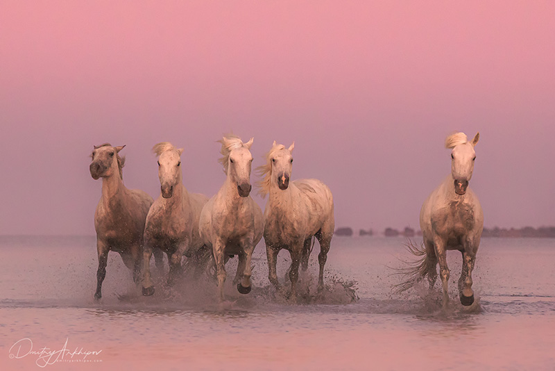 Photo tour to Provence, White horses of Camargue