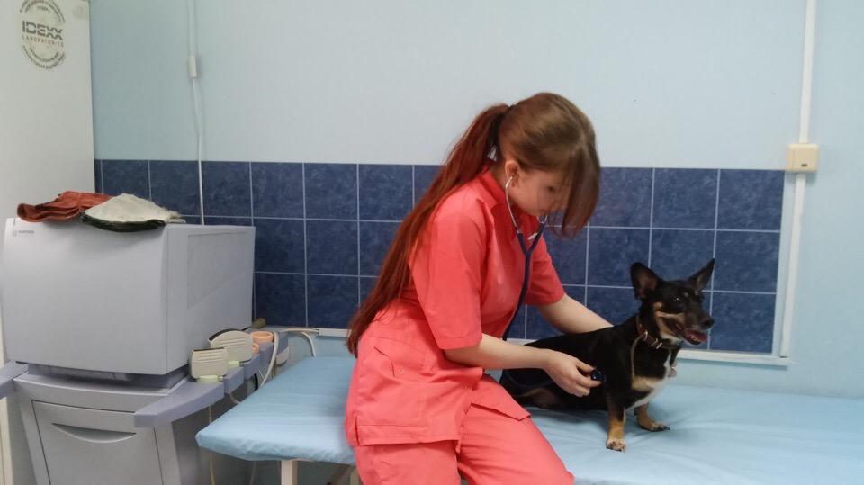 Купить франшизу ветеринарной клиники   Купить франшизу. ру