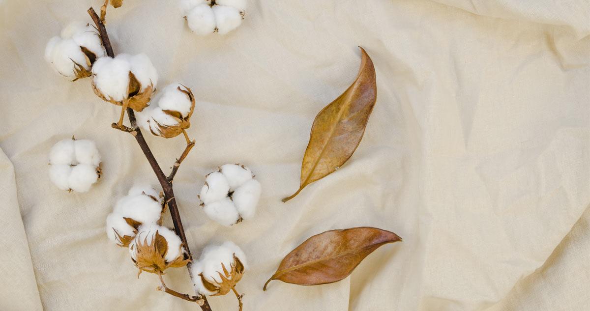 Вижте полезните качества на растението лен, от което се произвежда ленено семе, ленено масло и ленени дрехи.