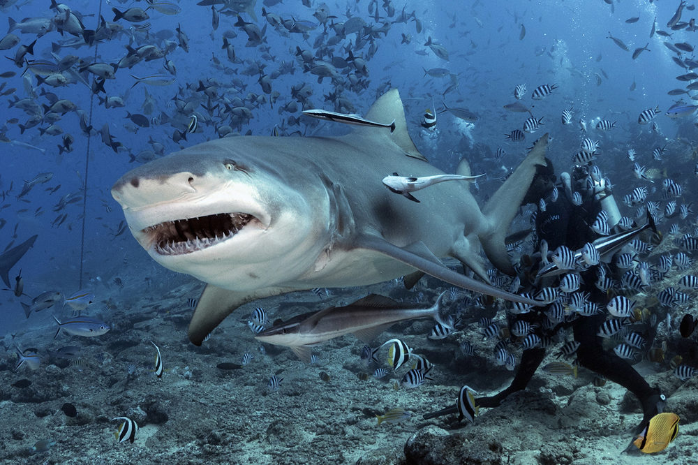 эффектные формы реальные фото акул в океане радуются каждому
