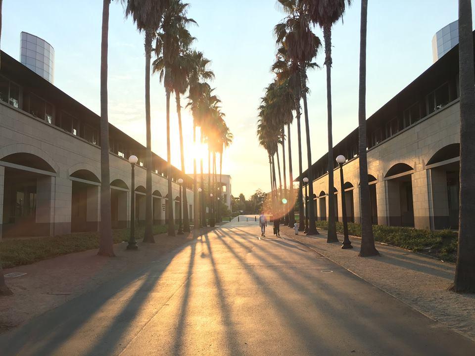 стенфорд,силиконовая долина,калифорния,университет,закат,рассвет,пальмы