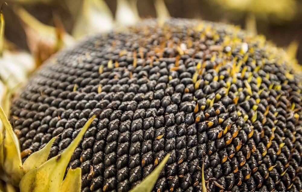 Правильне і збалансоване живлення рослин - запорука успіху