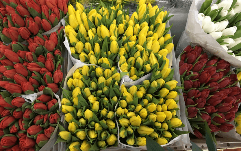 Букет, стоимость цветы тюльпаны оптом москва