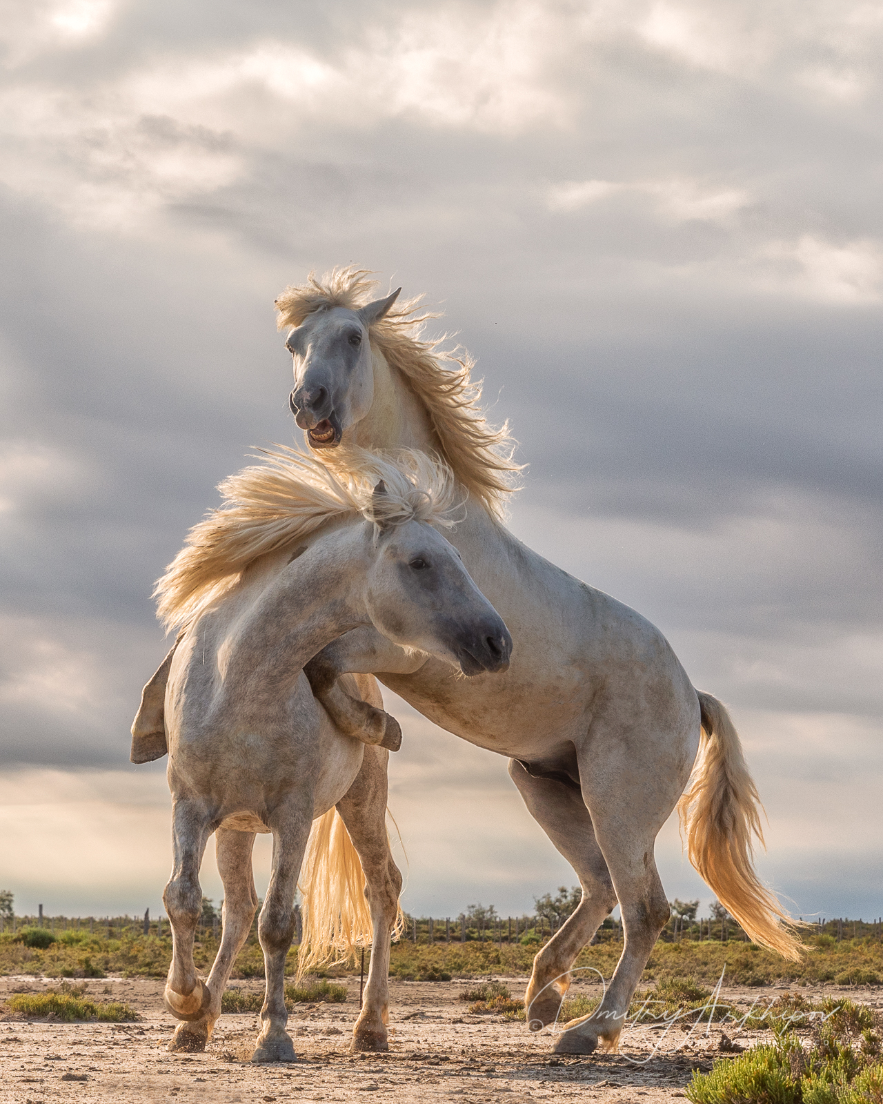 Фототур в Прованс, лошади Камарга
