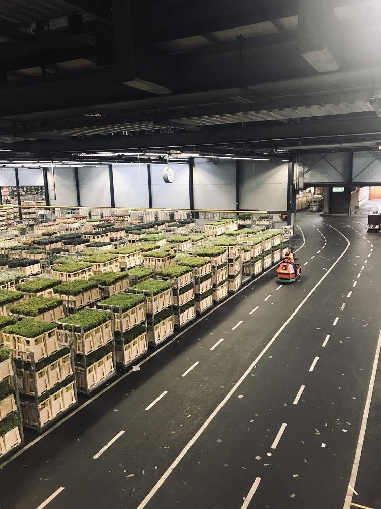 Цветочный аукцион в Голландии