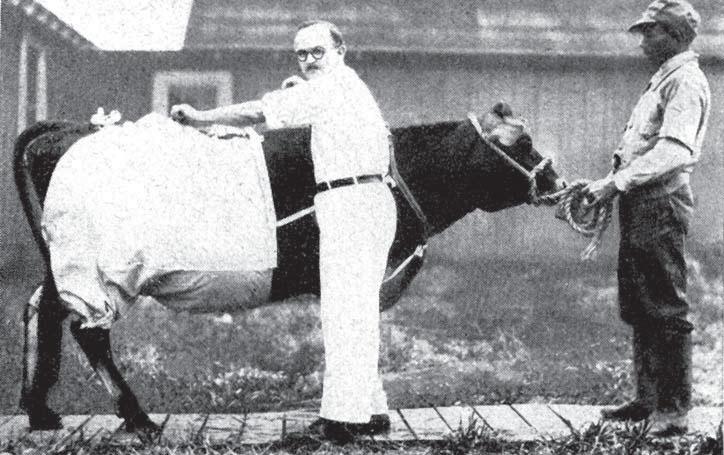 штаны для коровы
