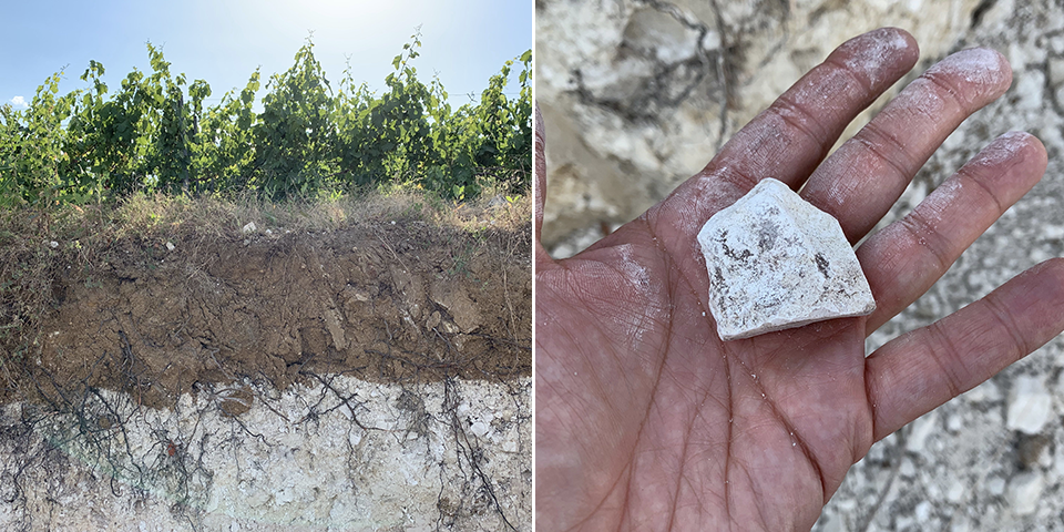 The essence of Champagne terroir. Left: Vines planted on 60-80 centimeters of clay topsoil over a bed of pure chalk. Right: Chalk remains cool and moist to the touch, even after a severe heat wave.