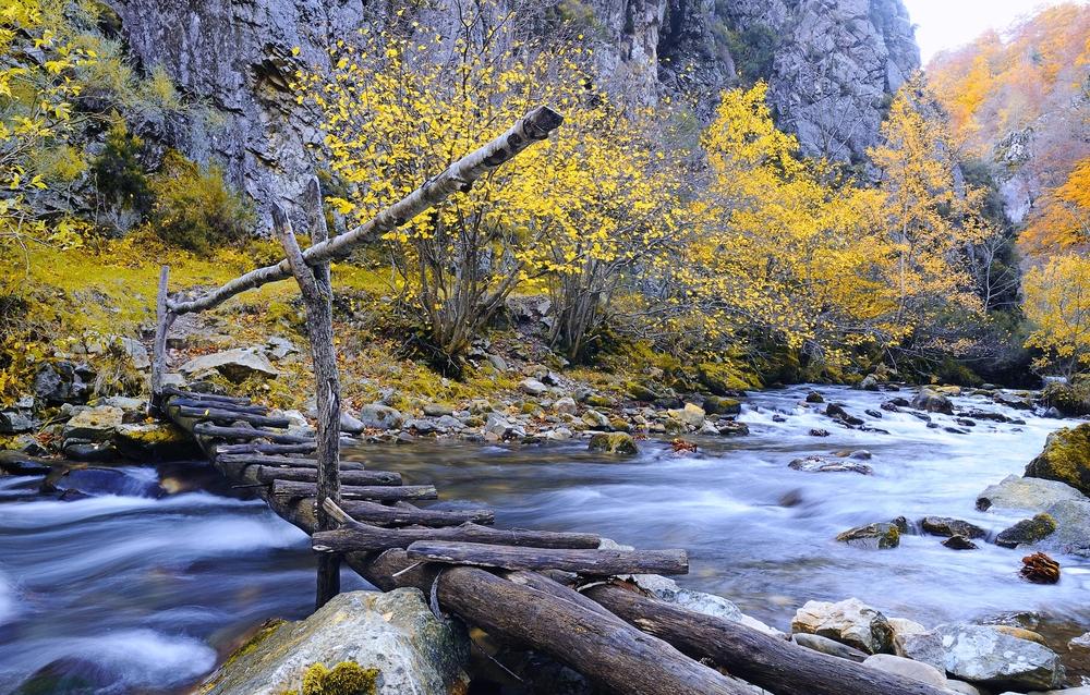 Буковые леса Испании Буковые леса Испании 9
