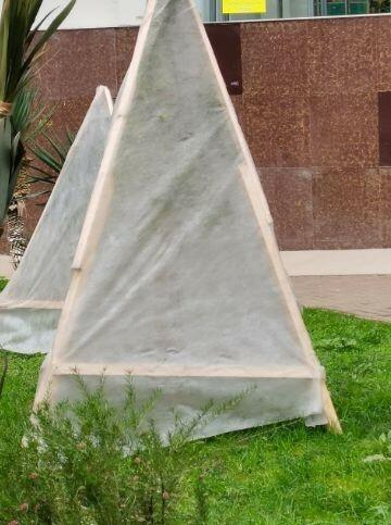 Очень важно, чтобы между ветвями и укрывным материалом была воздушная прослойка