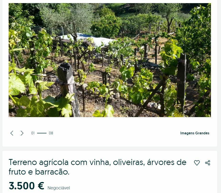 виноградник гуарда