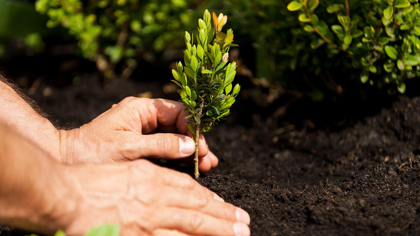 Мешканці Івано-Франківська можуть відзначити пам'ятну дату, посадивши дерево