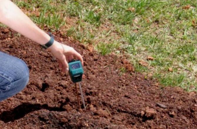 Точное знание параметров почвы необходимо для успешного выращивания саженцев