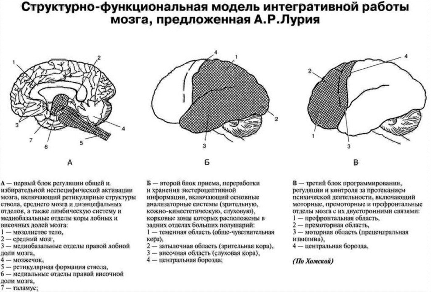 Теории и модели работы мозга работа в италии моделью