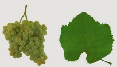 алваринью виноград