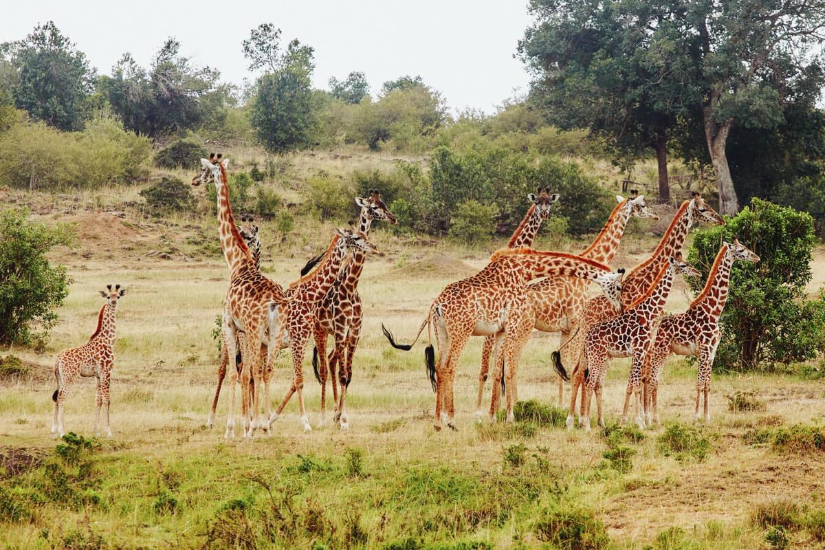 Love Story Photo Session In Masai Mara