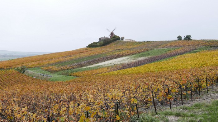 Champagne J.M. Labruyère vineyards in Verzenay Grand Cru