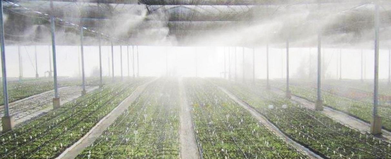 Влажность воздуха контролируется с помощью автоматизированных туманообразующих установок