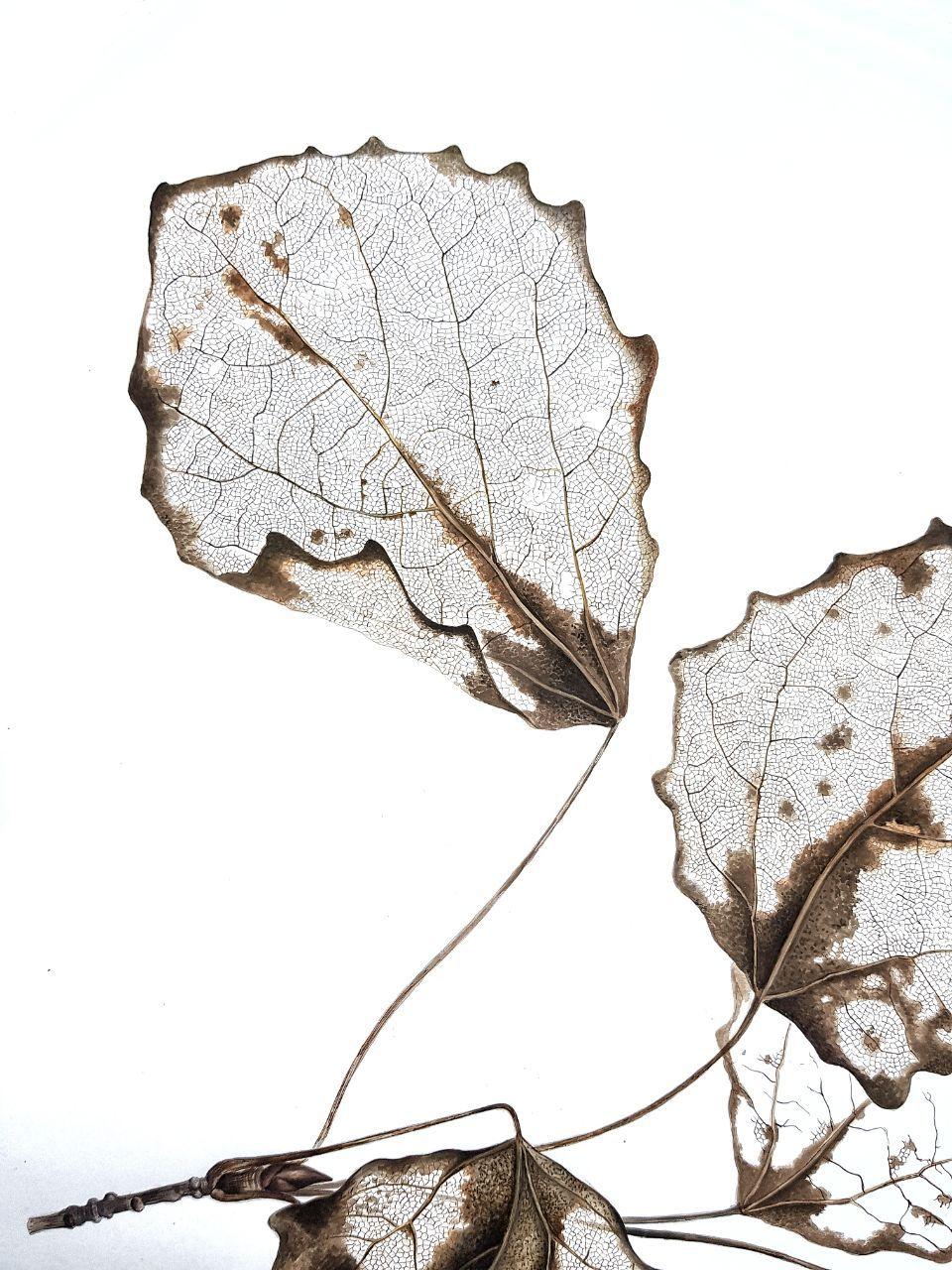 Где, скелетированные листья открытки