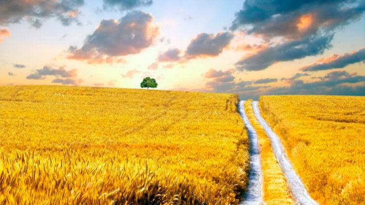 Украинское поле - фото