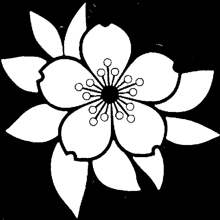Blume Lingerie