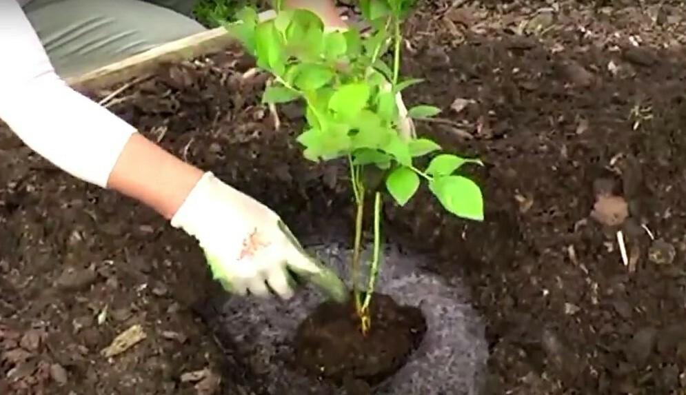 Высокие грядки и гребни исключают заболачивание земли