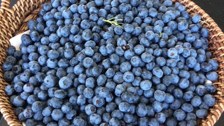 Вкус ягод сорта Санрайз в полной мере раскрывается после охлаждения