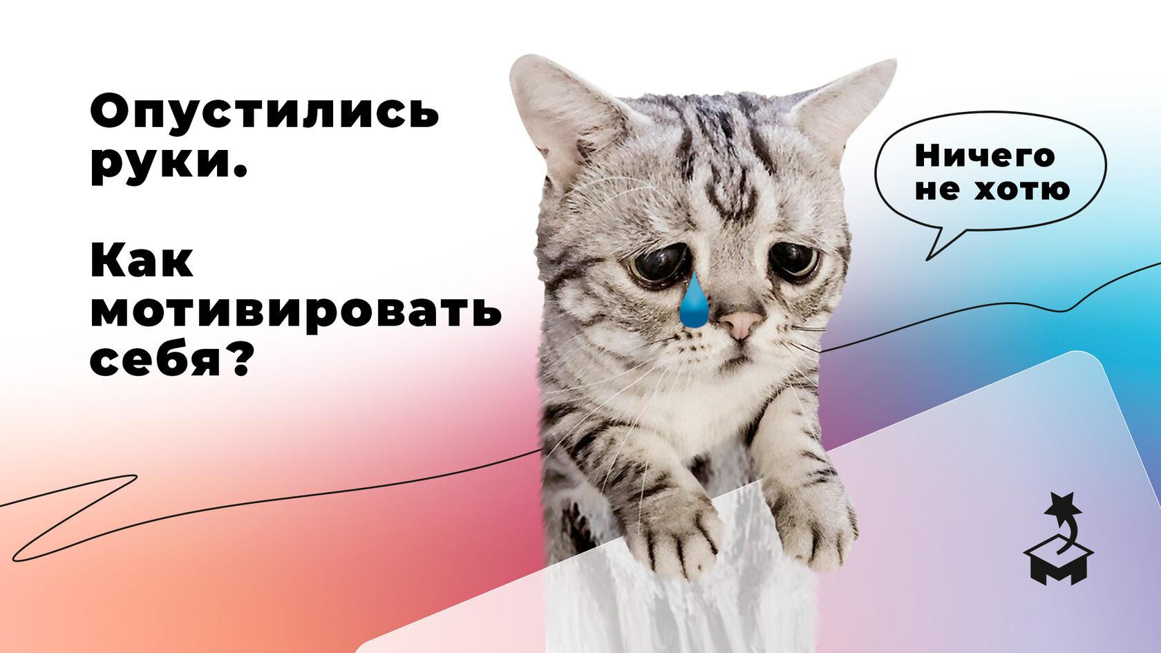 Грустный кот, который потерял мотивацию
