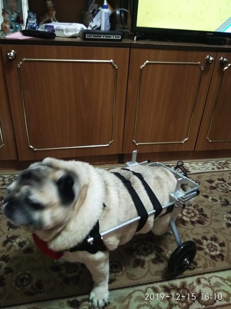 Купить инвалидную коляску для животных