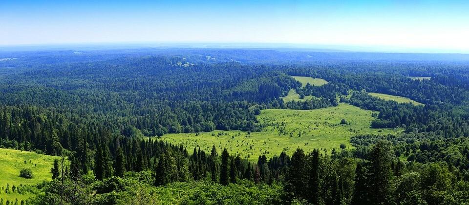 На Урале, в зависимости от территории, можно выращивать голубику раннего и среднего срока созревания