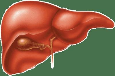 печень и лечение гепатита с
