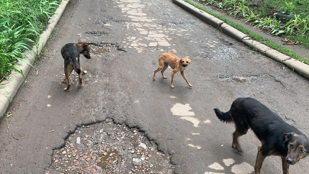 Бездомные собаки. Худые собаки. Собаки без еды.