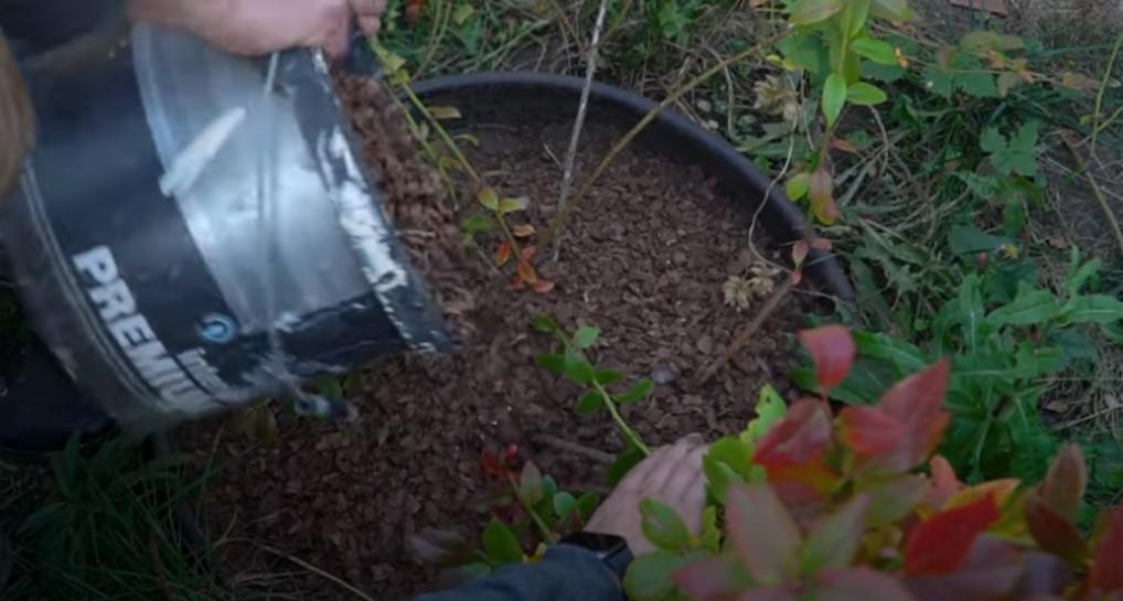 Слой мульчи защитит корневую систему от морозов