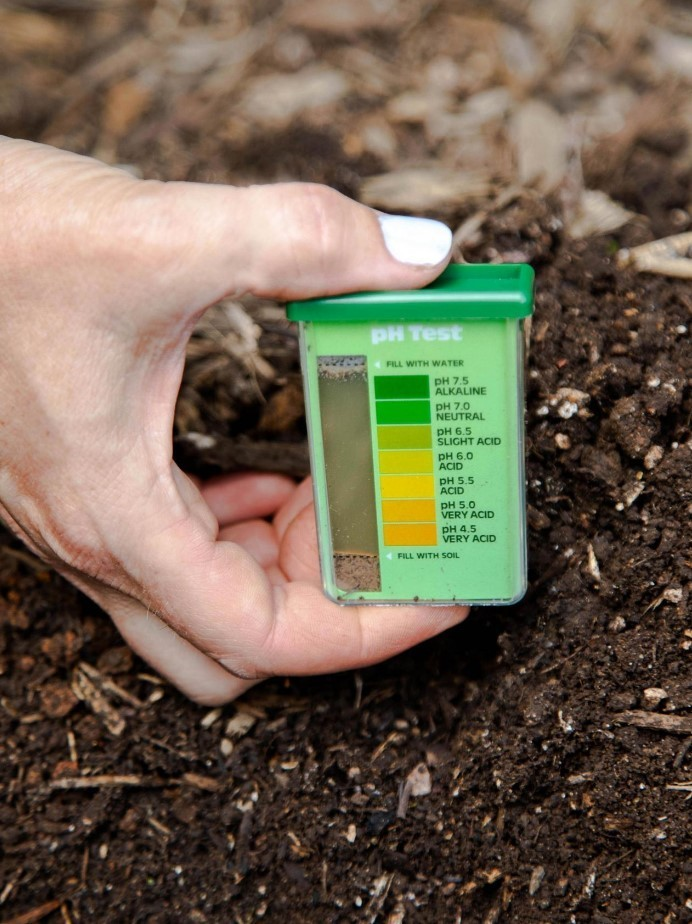 Кислотность почвы измеряют рн-метрами. Для голубики она должна находиться в пределах 3,5–4,5