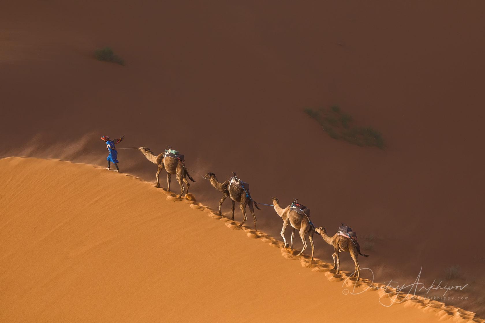 Caravam in the Sahara