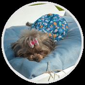 Мягкие матрасики для собак