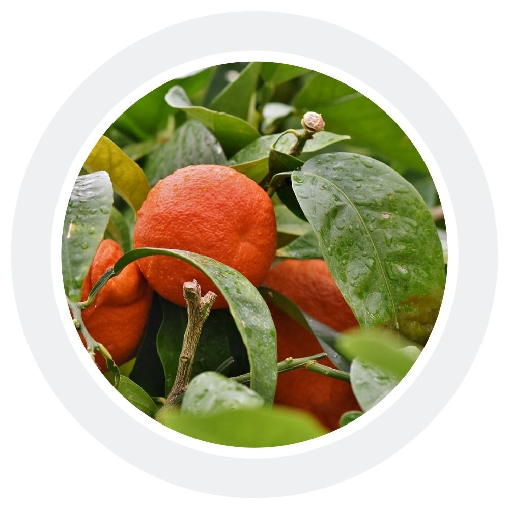 Апельсин сладкий - 100% натуральное эфирное масло