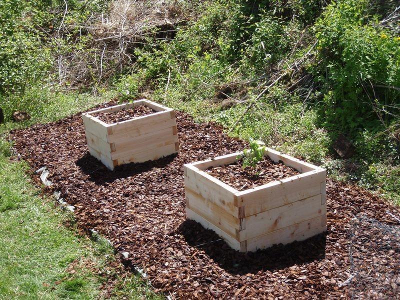 Грядки-короба должны быть не менее 1мХ1м и высотой 25-40см для улучшения аэрации голубики во время выращивания