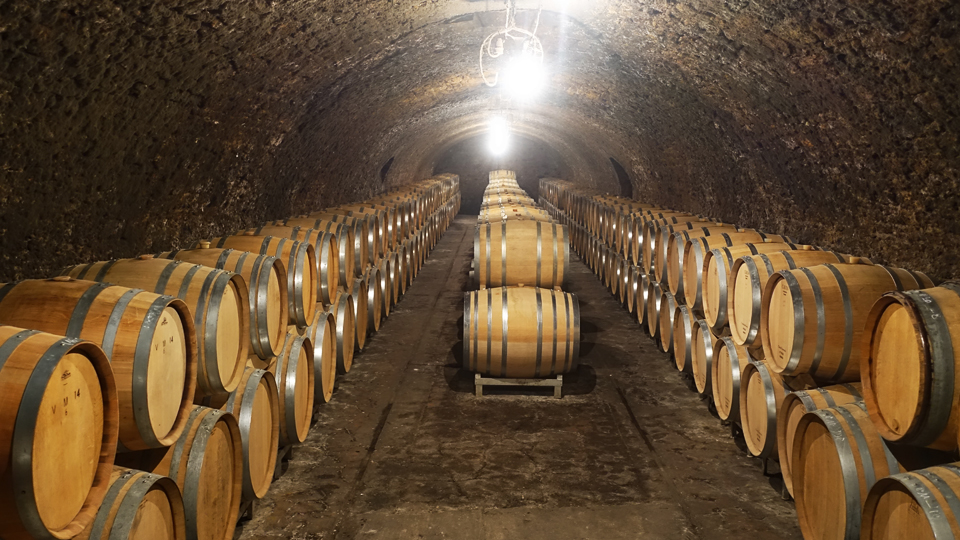 The newest vintage aging in French oak barriques
