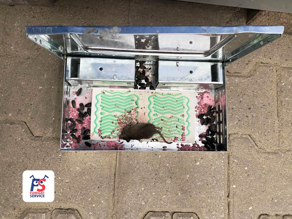 Как избавиться от мышей в доме раз и навсегда?